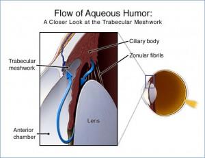 Diagram show the aqueous flow within the eye