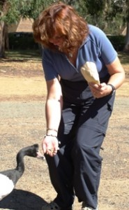 Picture of Cathy feeding the 'flesh-eating' Aussie ducks.