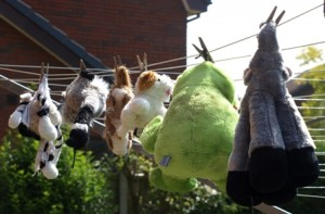 Picture of Biscuit's toys hanging on the washing line after being washed.